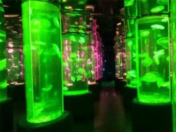 2018 acrylic jellyfish tank dobavljač
