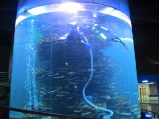 čist akril cilindar veliki riba cisterna za akvarije ili ocean park