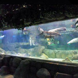 Prilagođeni luksuzni dizajn podvodnih akrilnih panela akvarijuma Staklena ploča