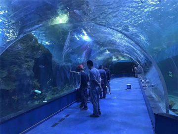 Prilagođeni pleksiglas akrilni tunel akvarijum