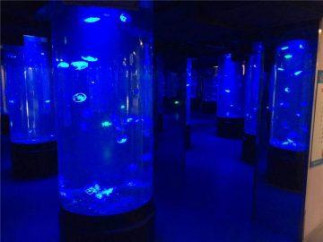 akrilni meduz riba akvarijum staklo