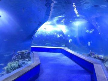 prozirno akrilno staklo Tunel akvarijum